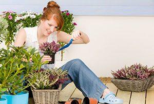 Чим поливати кімнатні квіти щоб вони цвіли