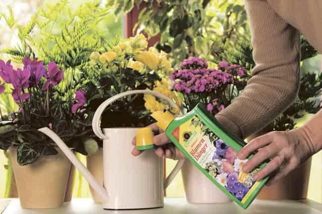 подкормка-цветов-в-домашних-условиях