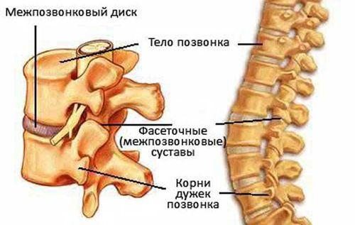 Остеохондроз шейного отдела у собаки
