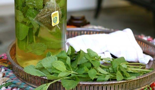 steviya-chto-ehto-takoe-v-kulinarii