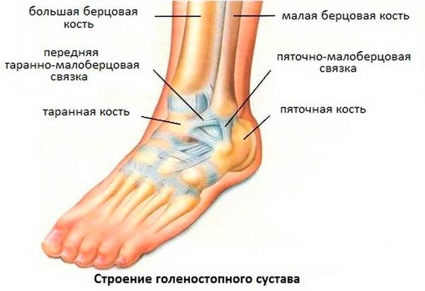 artroz-golenostopnogo-sustava-simptomy-i-lechenie