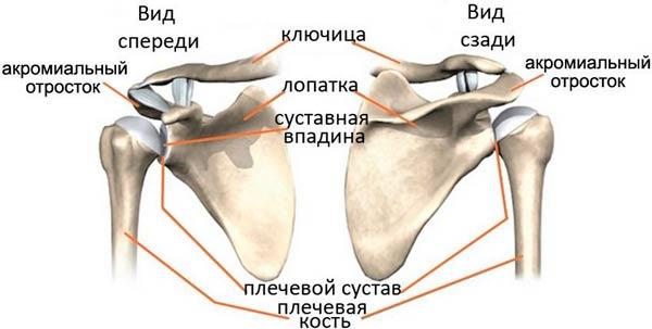 artroz-plechevogo-sustava-simptomy