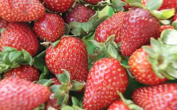 Как сварить клубничное варенье густое с целыми ягодами