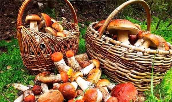 грибы-для-икры