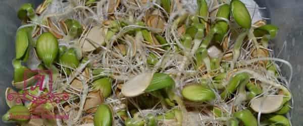 пророщенные-семена-тыквы