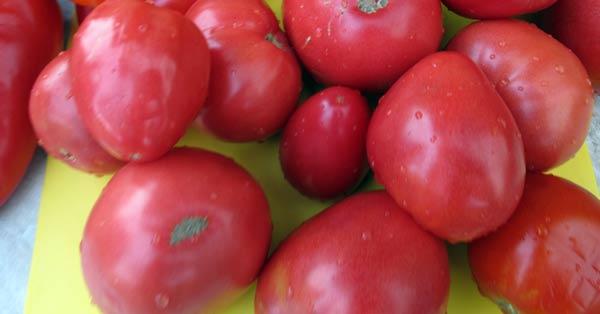 помидоры-для-лечо