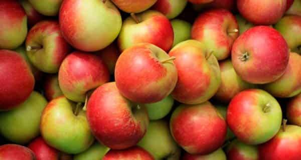 сорта-яблок-для-заготовок