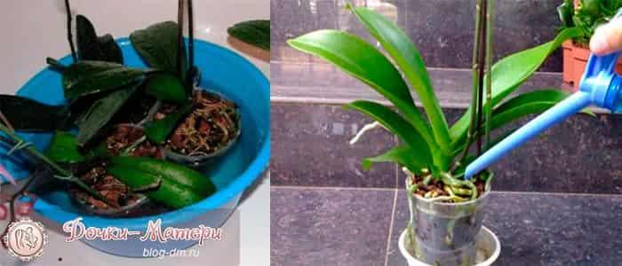 полив-орхидеи