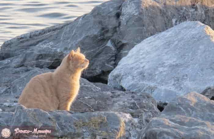кошка-на-набережной-моря