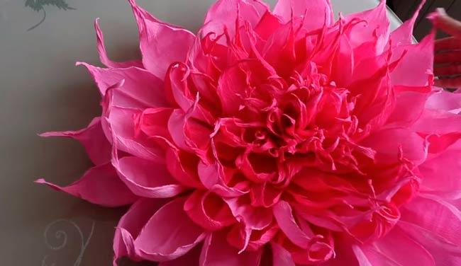 хризантема-готова