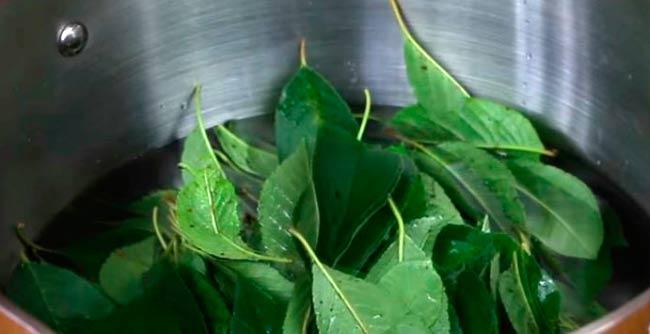 настой-из-листьев