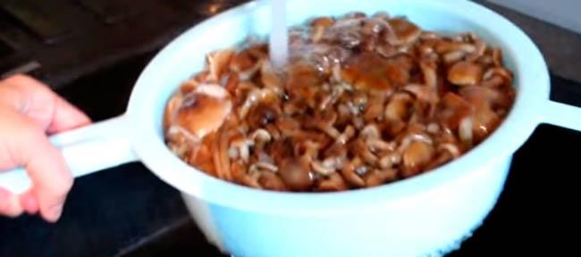 промываем-грибы