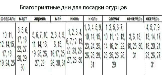 благоприятные-дни-для-посадки-огурцов