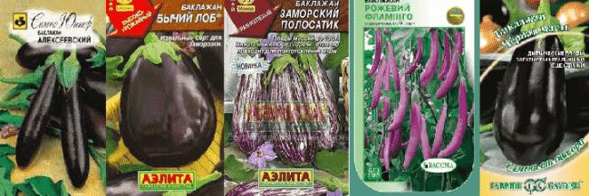 алексеевский-черная-масть-баклажаны