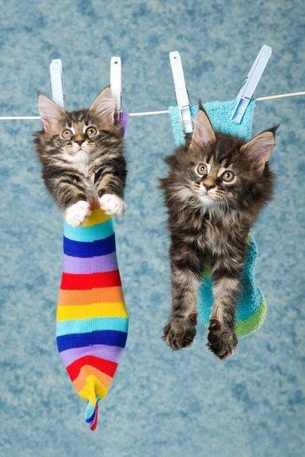 картинка-для-поздравления-кошки