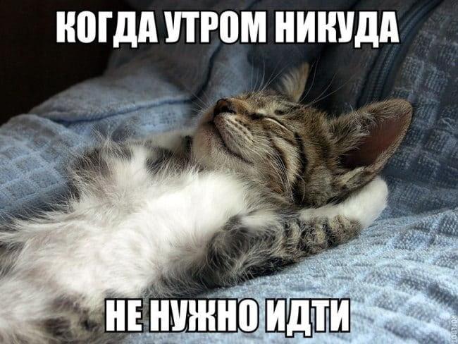 картинка-на-день-кошек