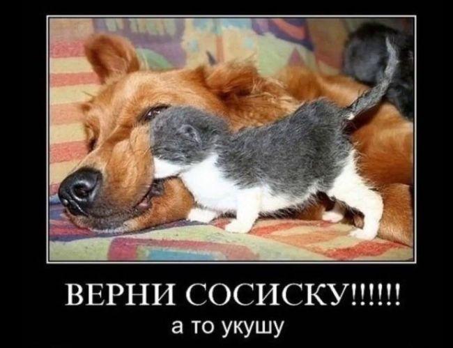 кошачий-день-1-марта