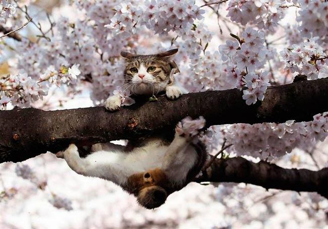 кот-в-цветах