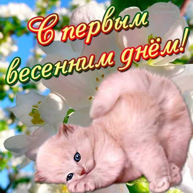 котики-поздравляют