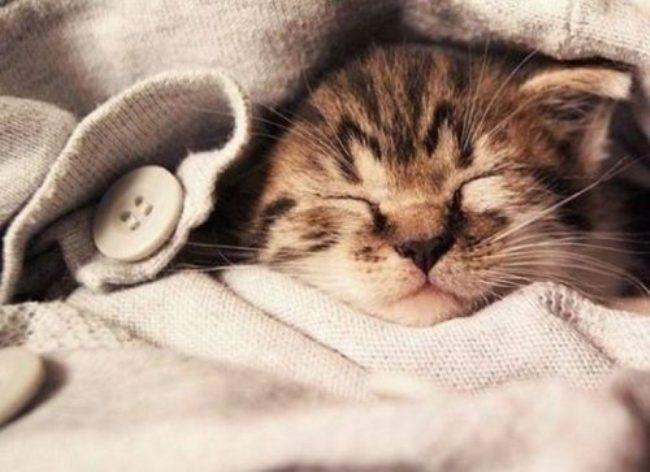 красивая-открытка-на-день-кошек