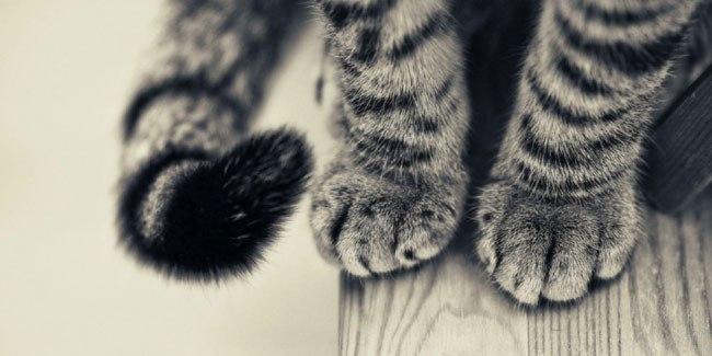красивое-поздравление-на-день-кошек