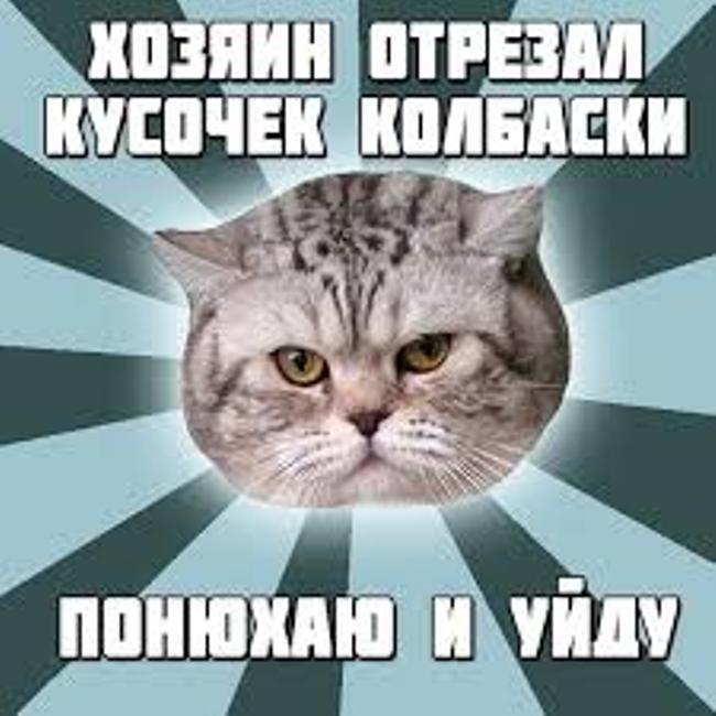 открытка-котам-на-день-кота