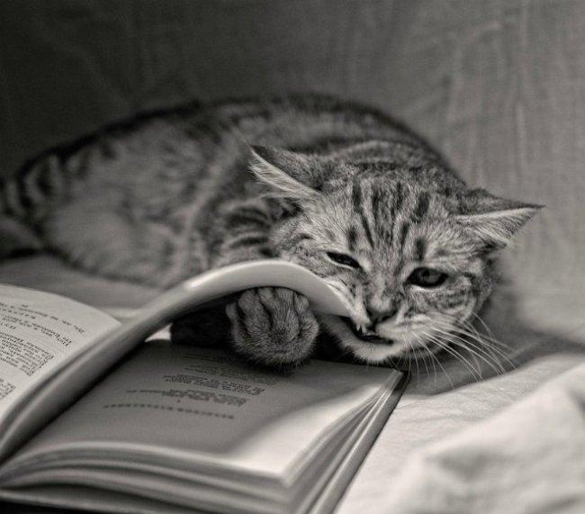 открытка-на-день-кошек