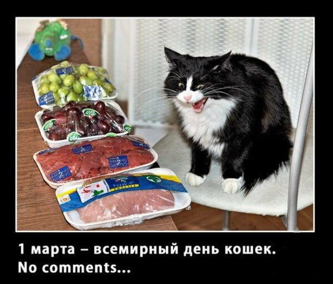 поздравления-для-кошек