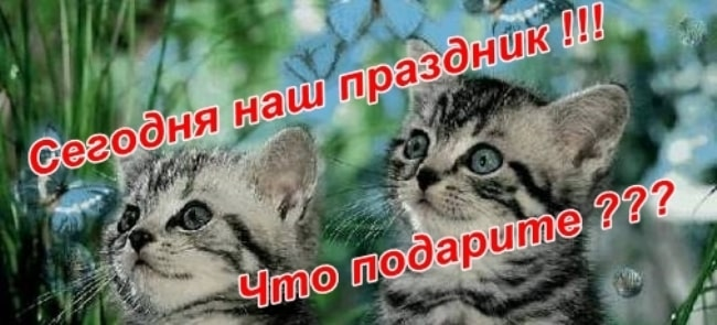 поздравляем-с-днем-кошек
