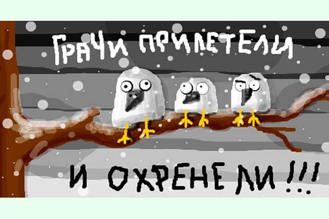 прикольная-картинка-грачи