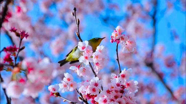 прилетели-птицы