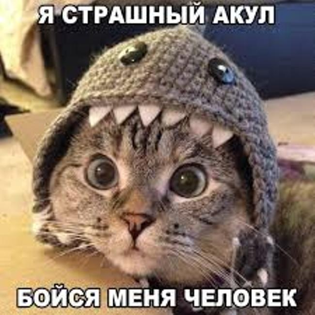 с-днем-кошек-картинка