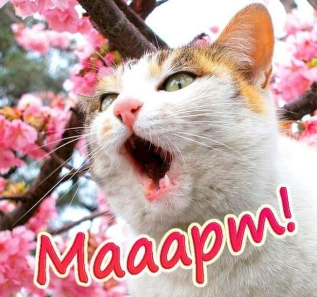 с-праздником-всех-кошек