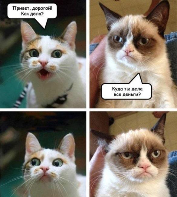 смешная-открытка-кошки