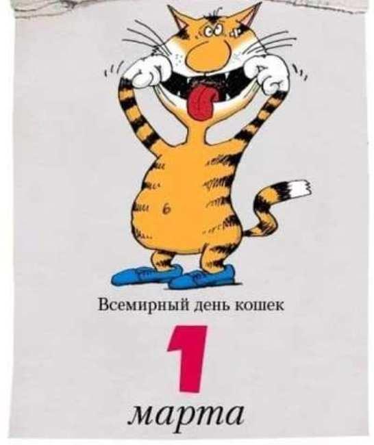 смешной-кот