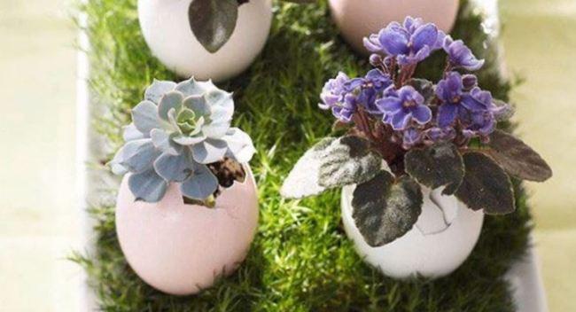 цветы-в-яйце