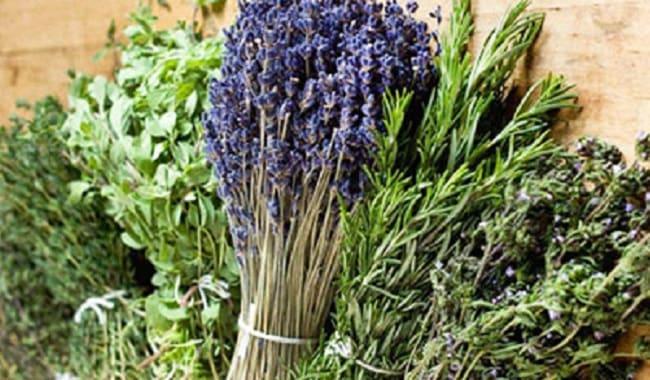 прованские-травы