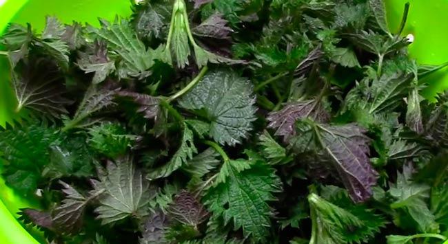крапивные-листья