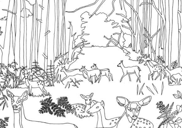 шаблон леса