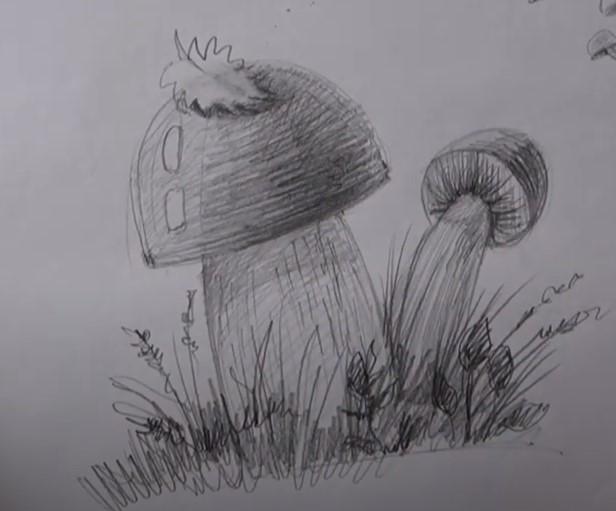 реалистичный рисунок грибов