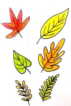 6 листьев разных цветов