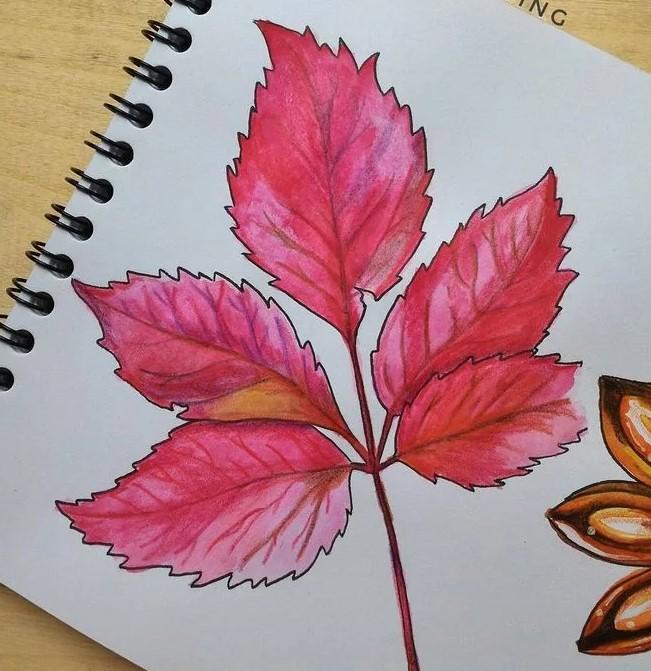 розовый лист