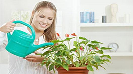 Как поливать цветы