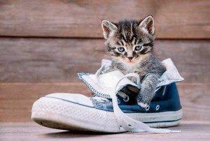 Как-вывести-запах-кошачьей-мочи-из-обуви