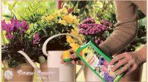 Чем подкормить цветы в домашних условиях для цветения?