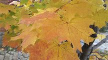Что общего между осенним настроением и окончанием дачного сезона?
