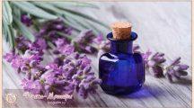 Эфирное масло лаванды: свойства и применение для себя и для дома