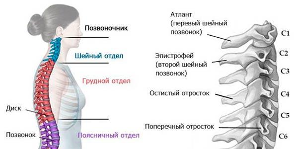gryzha-grudnogo-otdela-pozvonochnika