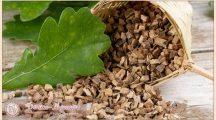 Кора дуба— лечебные свойства и противопоказания. Инструкция по применению