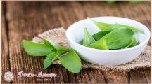 Польза и вред стевии для организма. Применение травы